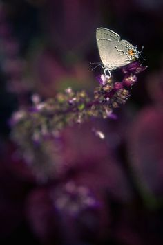 ** shades of aubergine. Plum Purple, Shades Of Purple, Deep Purple, Purple Flowers, Burgundy, Purple Haze, Midnight Garden, All Things Purple, Beautiful Butterflies