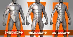 Важной частью построения тренировочного процесса является определение типа телосложения (соматотипа): эктоморф, эндоморф, мезоморф. Зная тип строения вашего тела, подобрать программу силовых тренировок и режим питания