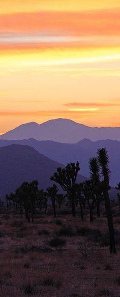Joshua Tree National Park, California, USA  // Premium Canvas Prints & Posters // www.palaceprints.com // STORE NOW ONLINE!
