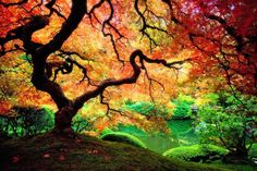 Autumn at Japanese Garden - scenery of a colorful Japanese garden in autumn