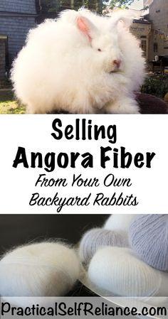 Selling Angora Rabbit Fiber