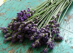 Handful of Lavender