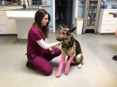 German shepherd survives after she's thrown off KC overpass