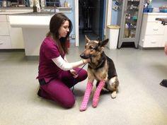 German shepherd survives after she's thrown off KC overpass