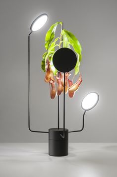 These light fixtures double as high-tech planters - Curbedclockmenumore-arrow : They rotate and provide moisture, too