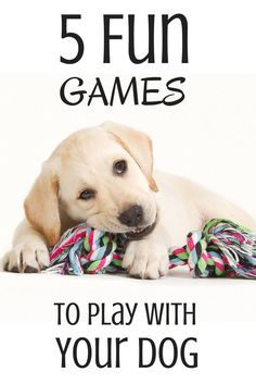 Check out these fun ways of entertaining your pup!