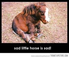 Sad Little Horse