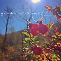 Watch #nature's colors move before your very eyes. #inspiration #quote #QOTD