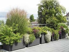 Garden pots and beautiful plants in the garden – new – Garden Care