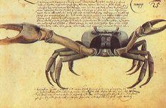 "Zacharias Wagenaer, Caranguejo. From ""Thier Buch"" (Book of Animals), 1641"