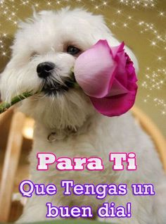 Good Morning In Spanish, Good Morning Funny, Good Morning Messages, Morning Humor, Happy Day Quotes, Good Day Quotes, Morning Greetings Quotes, Good Morning Quotes, Spanish Greetings