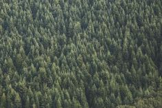 green, trees, forest, woods, nature