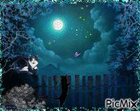 Los gatos nocturnos