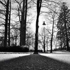 #Vichy #parc #ombre #light #blackandwhite
