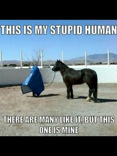 When I saw this, I laughed so hard that I cried! Can you just imagine what this horse is thinking!?