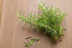 Plantas: Repelentes naturais de alguns insectos - novo-mundo