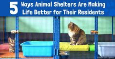 """A no-kill cat shelter in Georgia hosts wildly popular """"yoga with cats"""" classes held several times a month in the shelter's cage-free adult cat room. http://healthypets.mercola.com/sites/healthypets/archive/2017/01/10/yoga-with-cats-classes.aspx"""