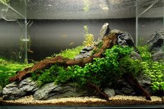 Planted aquarium. Nice natural flow between the wood, rock and foliage.