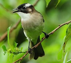 a small bird is singing in a green forest
