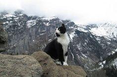 Кот-проводник спас заблудившегося в горах путешественника