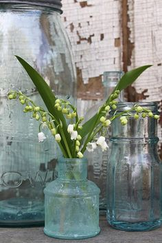 I sure wish my lilies of the valley would bloom.  I would put a little bouquet of them in my antique medicine bottles.