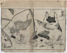 [Domestic cat nursing kittens]  Creator(s): Tachibana, Morikuni, 1679-1748, artist       [+]  Date Created/Published: 1720.