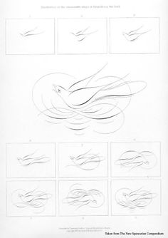 Offhand bird flourish, calligraphy