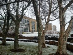 A view of a snowy Aghadoe Heights, Killarney through the trees #Killarney #Hotel