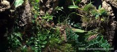 this article I'll show you how one of my orchidariums was created. I hope this feature will help you create an orchidarium, vivarium, terrarium, or other lo