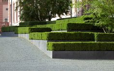 hedges / repinned on toby designs
