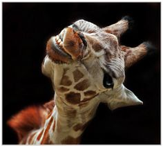 Friendly, Klaus Wiese