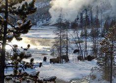 yellowstone winter   Yellowstone Wildlife Cabins - Winter Photos