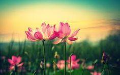 ʚiɞ Borboletas são tão belas ʚiɞ: VALORIZE-SE Valorizar-se é aprender a dizer não.Va...