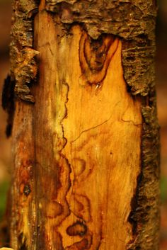 Tree Trunk Patterns by viwehei, via Flickr