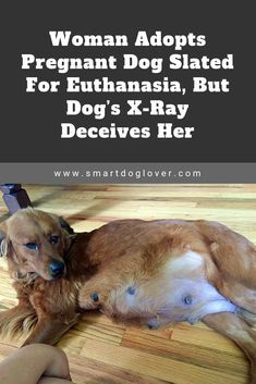 Woman Adopts Pregnant Dog Slated For Euthanasia But Dog S X Ray Deceives Her Pregnant Dog Dogs Pregnant