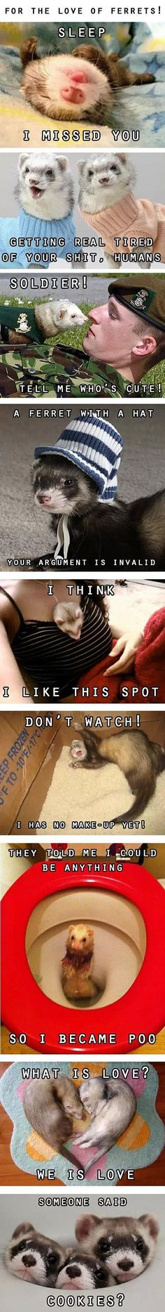 Humorous compilation of cute ferrets pictures with funny captions. Getting real tired of your sh*t humans. Ferrets Care, Baby Ferrets, Funny Ferrets, Pet Ferret, Funny Animals With Captions, Funny Captions, Cute Funny Animals, Funny Cute, Animals And Pets