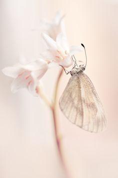 beautiful butterfly//