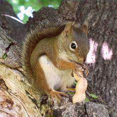 1000 Ideas About Squirrel Repellant On Pinterest Squirrel Baffle Squirrel Proof Bird Feeders