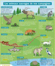 Les animaux sauvages de nos campagnes