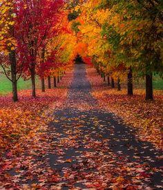 Autunno: le più belle foto del foliage