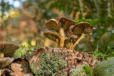 Autumn mushrooms on a tree trunk at Kaapse bossen Doorn, the Netherlands