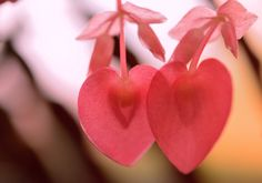 Heart-shaped leaves of the Begonia.