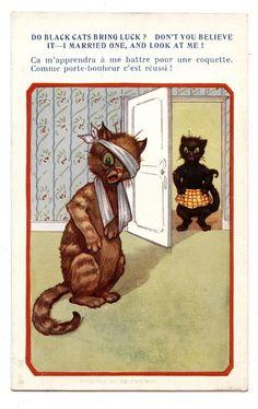 CHAT.CAT.KATZE
