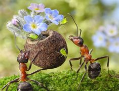 Up close and personal with ants: Photographer's macro shots show insects in bizarre spots Russian snapper Andrey Pavlov lured his subjects on to mugs and tables by tempting them with honey and fruit..