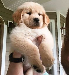 This adorable puppy golden retriever will brighten your day. Dogs are wonderful companions. Super Cute Puppies, Cute Baby Dogs, Cute Little Puppies, Cute Dogs And Puppies, Baby Puppies, Cute Little Animals, Cute Funny Animals, I Love Dogs, Funny Dogs