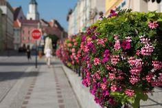 Pomysł na ukwiecenie: pelargonia w skrzynkach | Inspirowani Naturą I flower decor in boxes atech.pl-eu Flower Boxes, Flowers, Urban Furniture, Sidewalk, Cities, Poland, Inspiration, Business, Beautiful Things