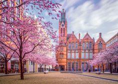 Au printemps cherry blossom