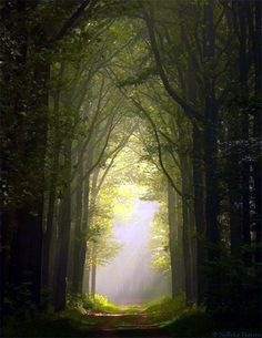Fascinating Photographs of Forest Paths to another world (39)
