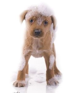 soap for dogs with itchy skin
