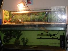 turtle tank with a home made above tank basking area